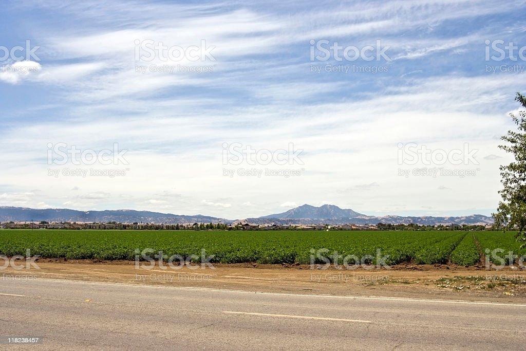 Growing Fields stock photo