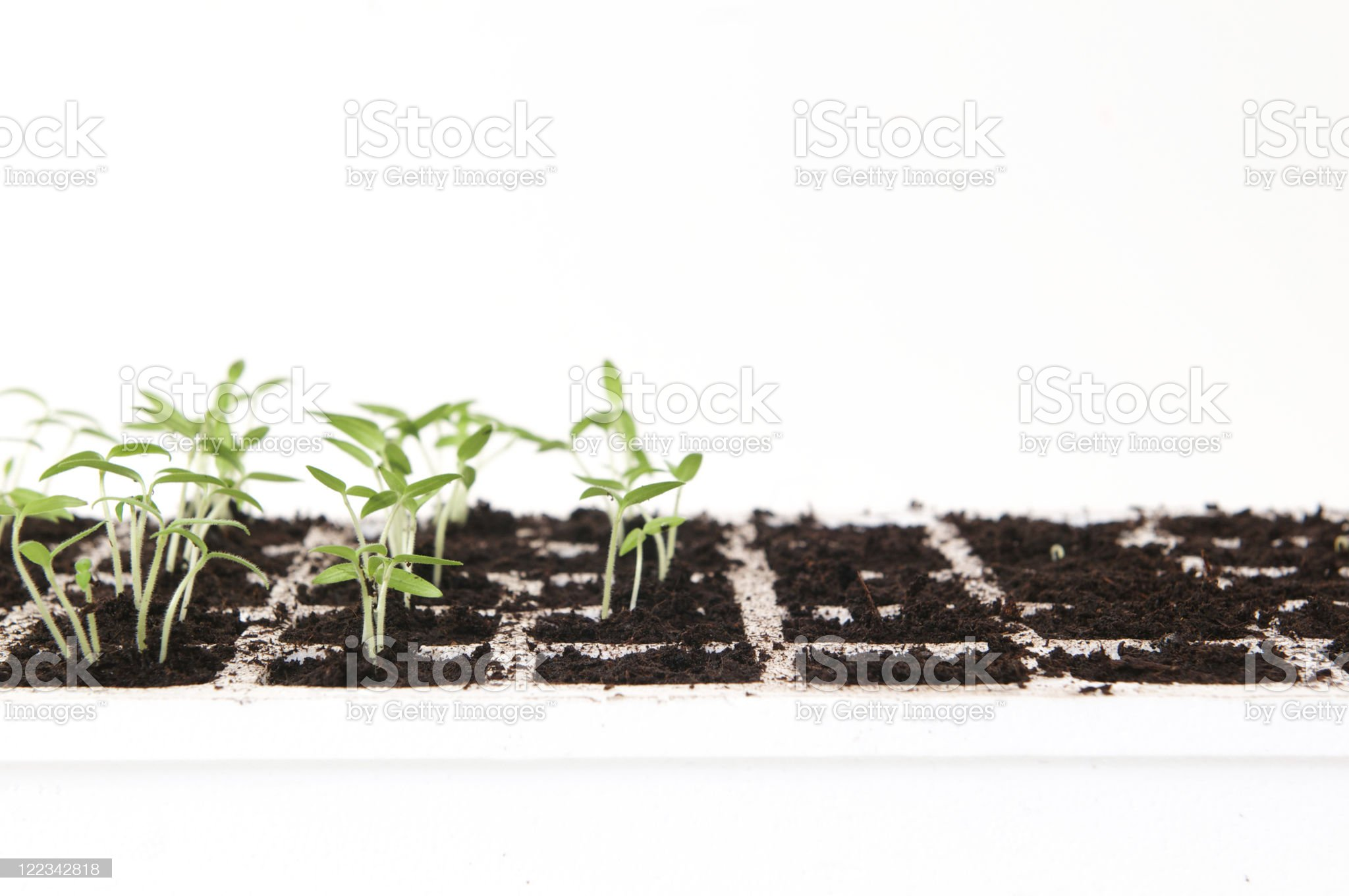 Growing from seed royalty-free stock photo