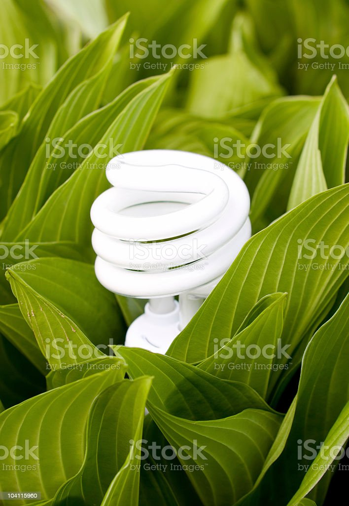 Growing Green royalty-free stock photo