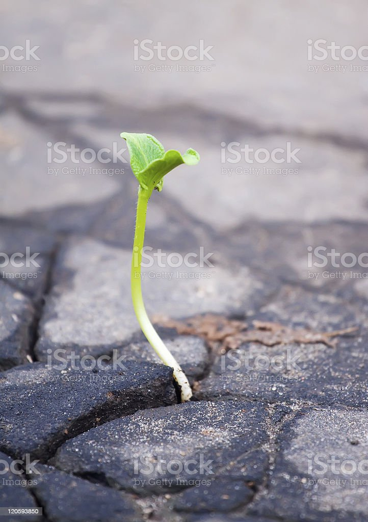 Growing  green sprout in asphalt stock photo