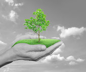 Growing green tree in hands over black and white sky