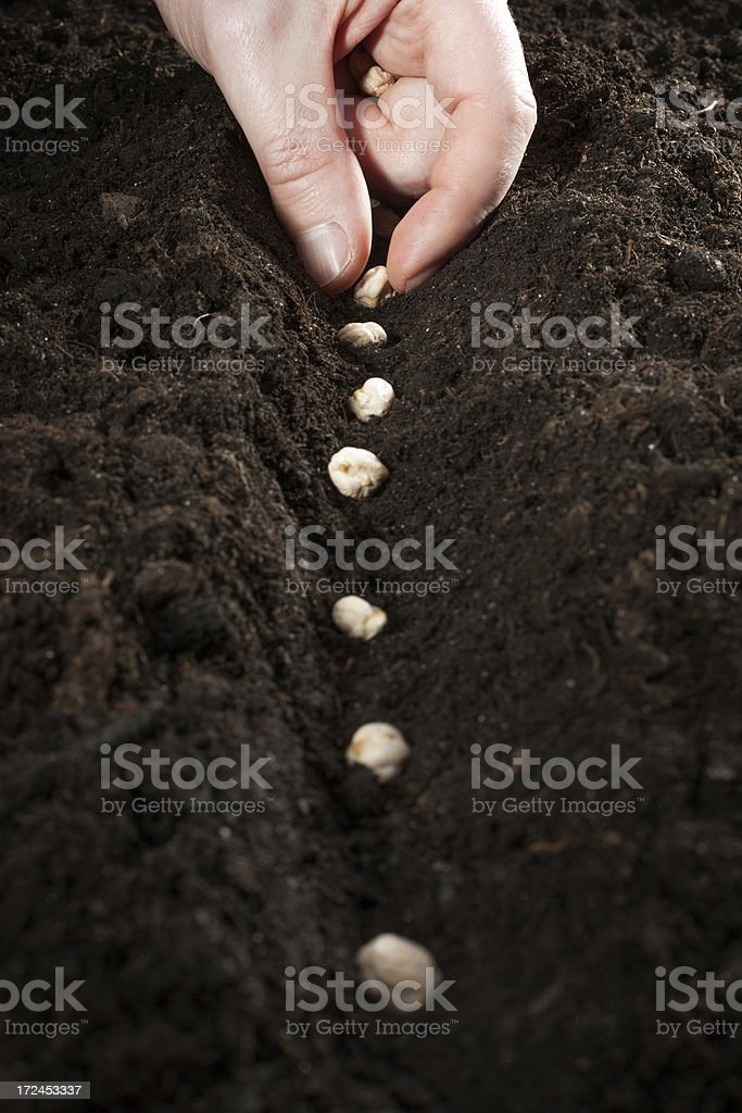 Growing healthy food royalty-free stock photo