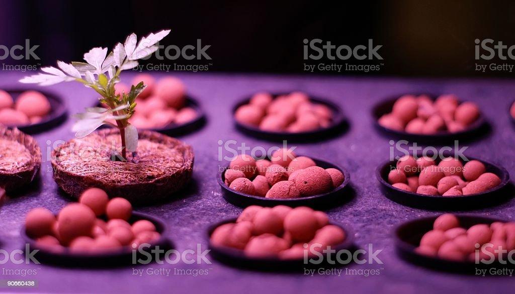 Growing Life royalty-free stock photo