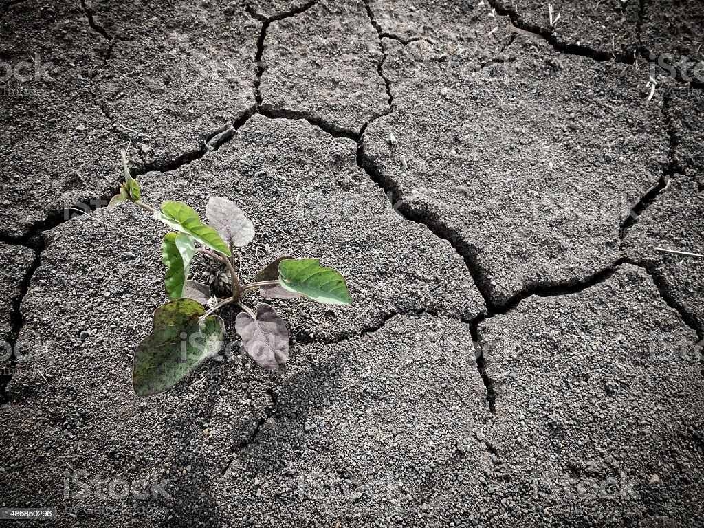Growing little tree on dry and crack infertile soil stock photo