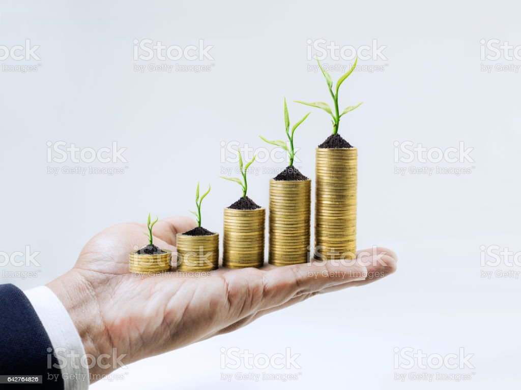 Growing money with tree on businessman hand.business investment stock photo