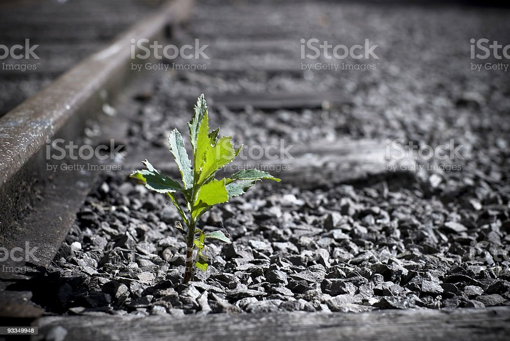 Growing Nature stock photo