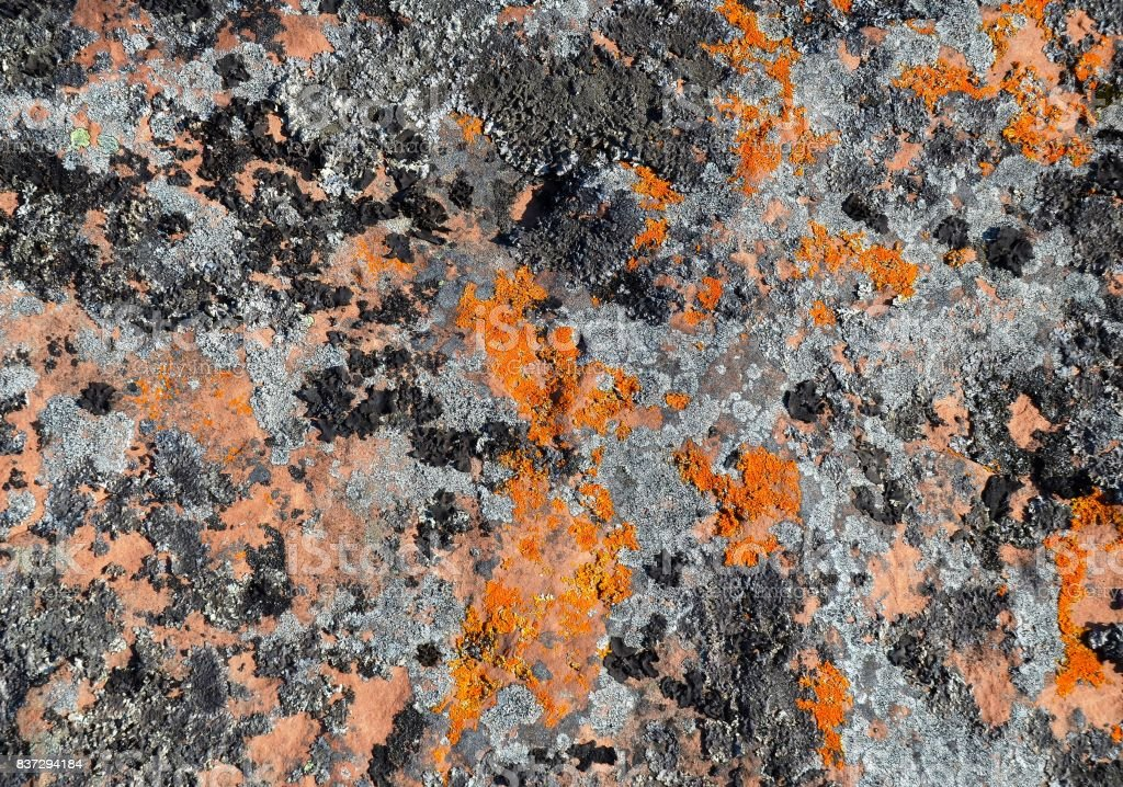 Growing on huge stone slabs colored mosses, fungi and lichens create a quaint camouflage pattern stock photo