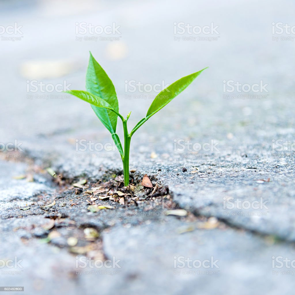 growing out of concrete stock photo