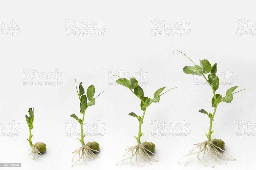 Growing stock photo