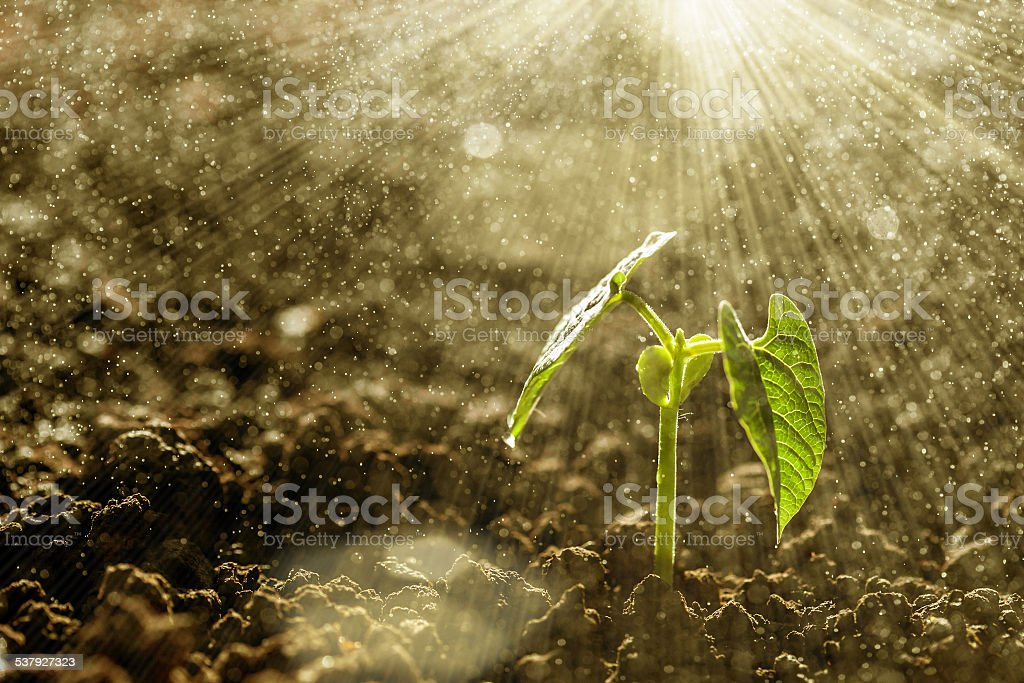 growing stock photo