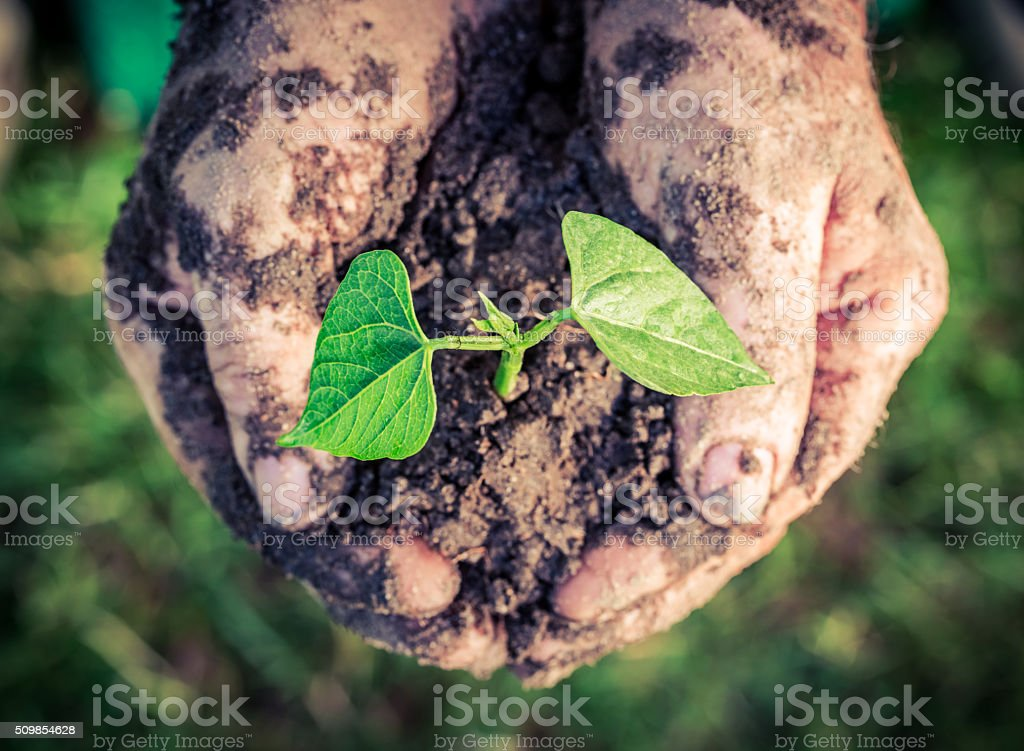 Growing plant in hands stock photo
