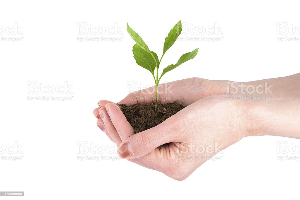 Growing Plant on hand isolated stock photo