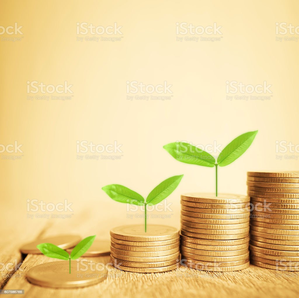 Growing plant on rows of coin money stock photo