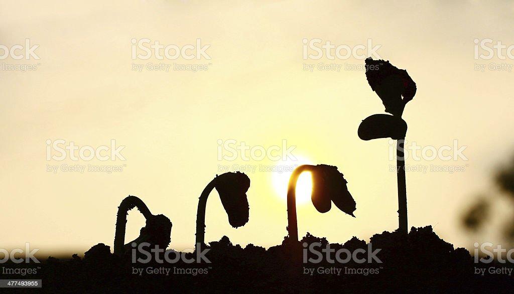 Growing plant stock photo