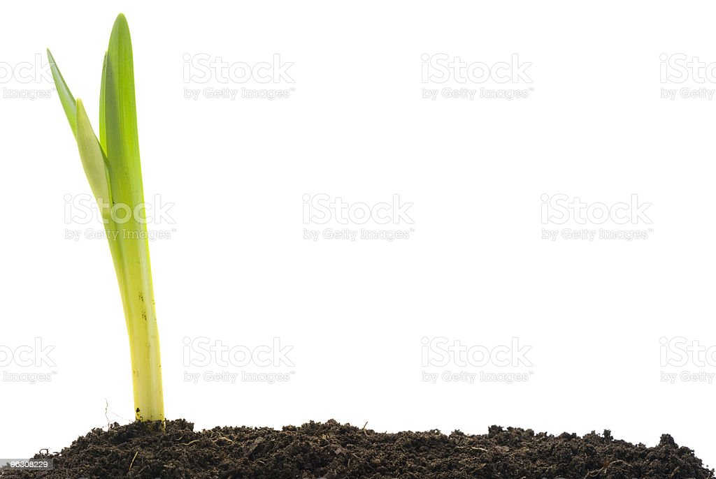Growing plant (XXL) royalty-free stock photo