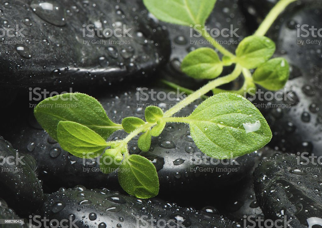 Growing plant stock photo
