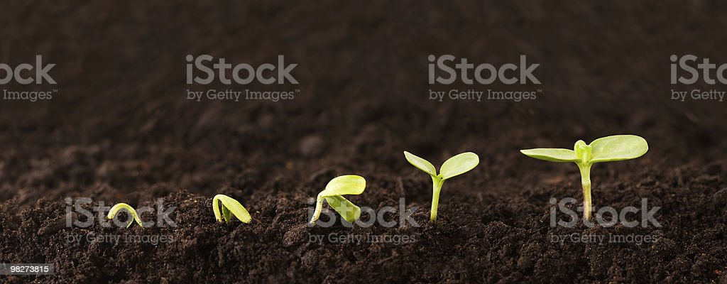 Growing Plant Sequence in Dirt stock photo