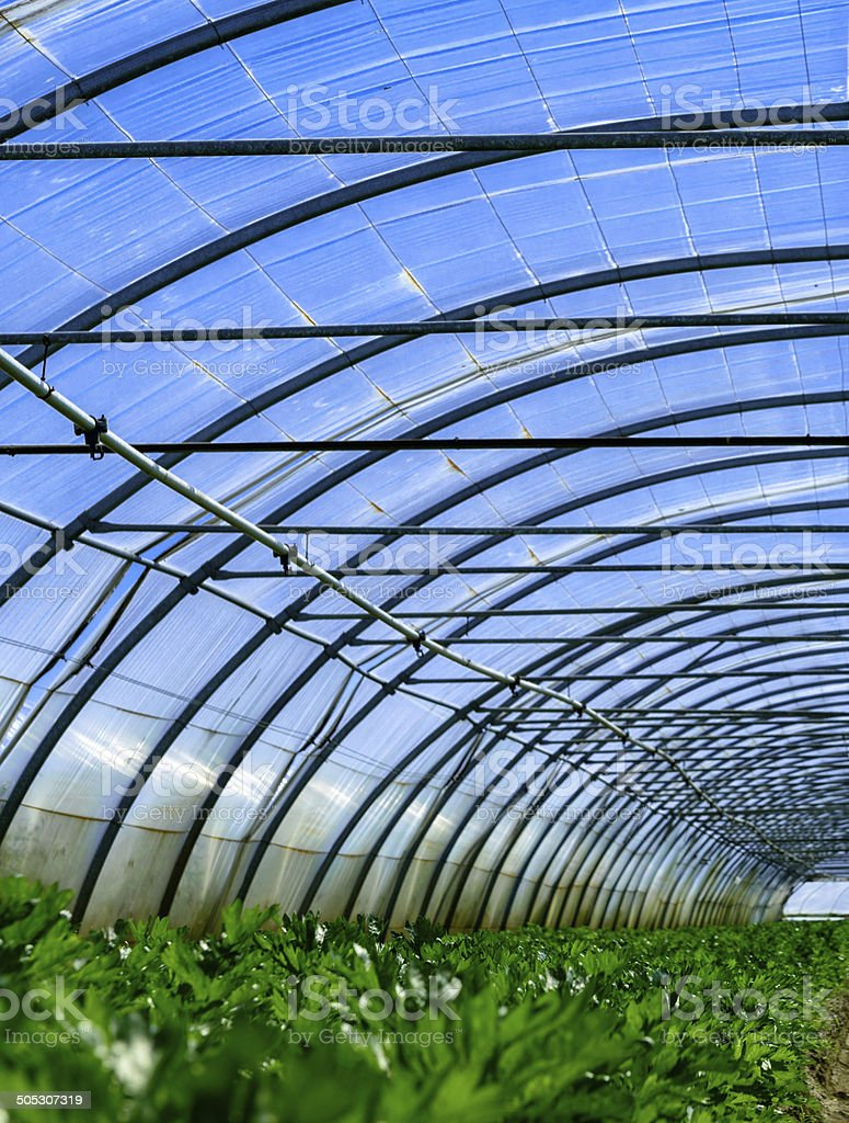 growing plants in a greenhouse royalty-free stock photo