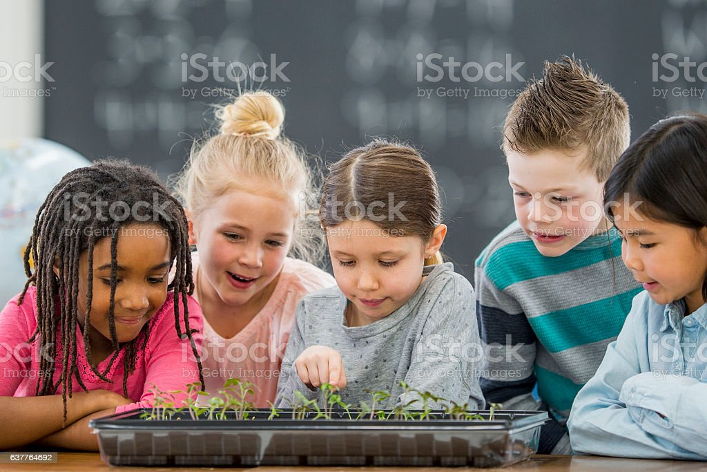 Growing Plants in Class stock photo