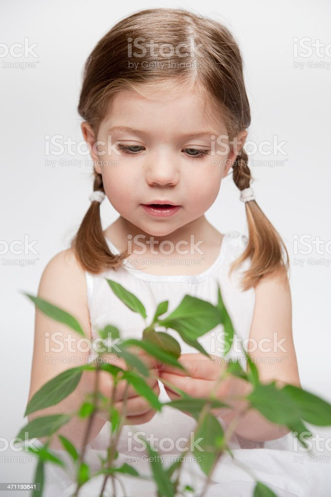 Growing serie royalty-free stock photo