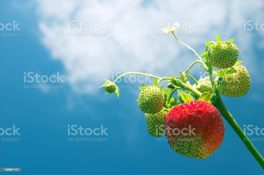 Growing to the sun! royalty-free stock photo