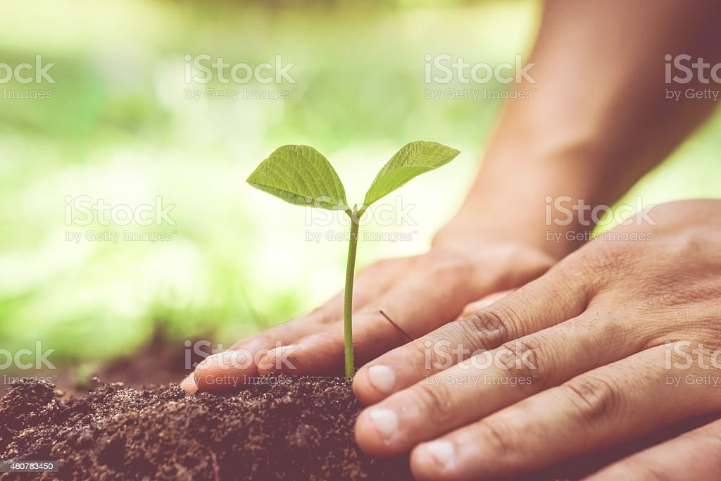 growing tree / Love nature stock photo
