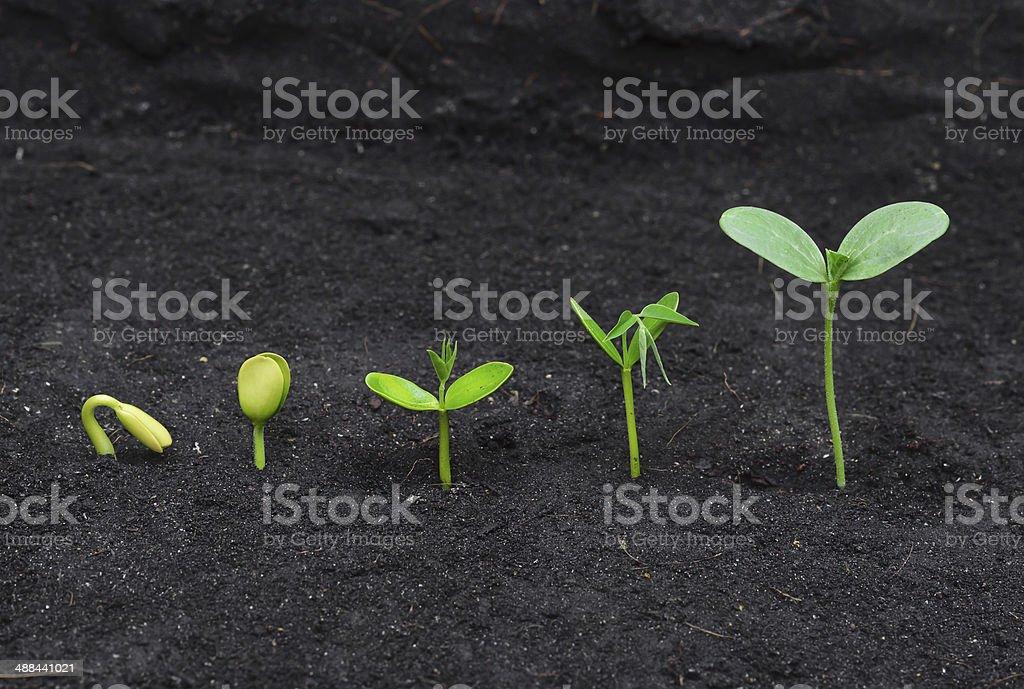 growing tree stock photo