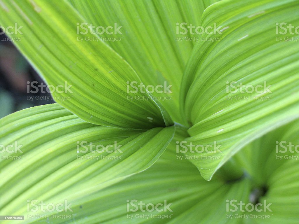 Growing Upclose royalty-free stock photo