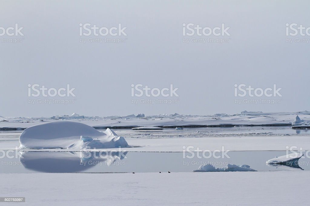 growler among ice floes in winter polynyas Antarctic waters stock photo