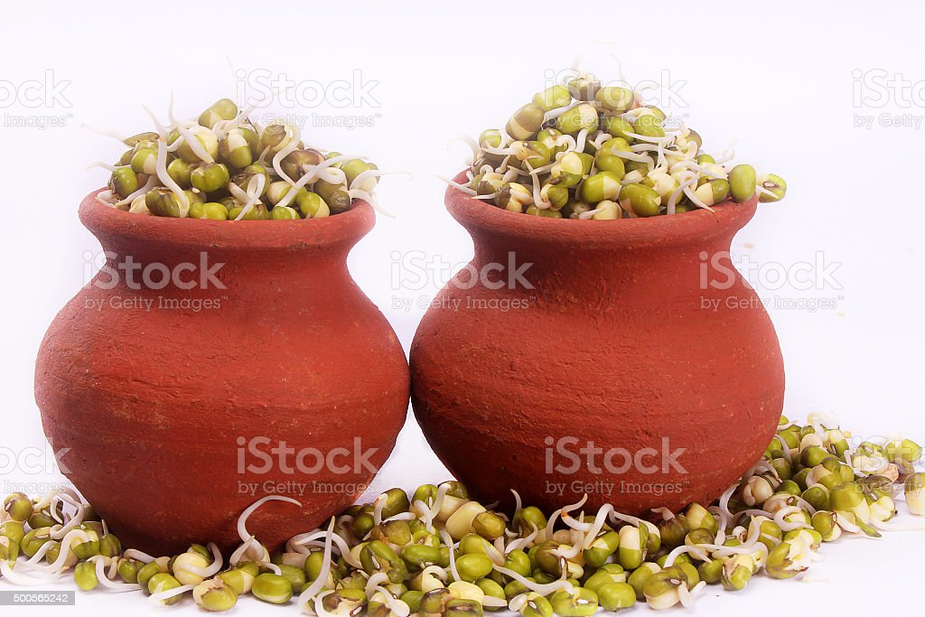 grown mung bean sprouts  for culinary use stock photo