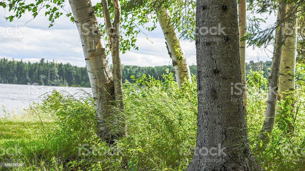 Grown Trees Lakeside stock photo