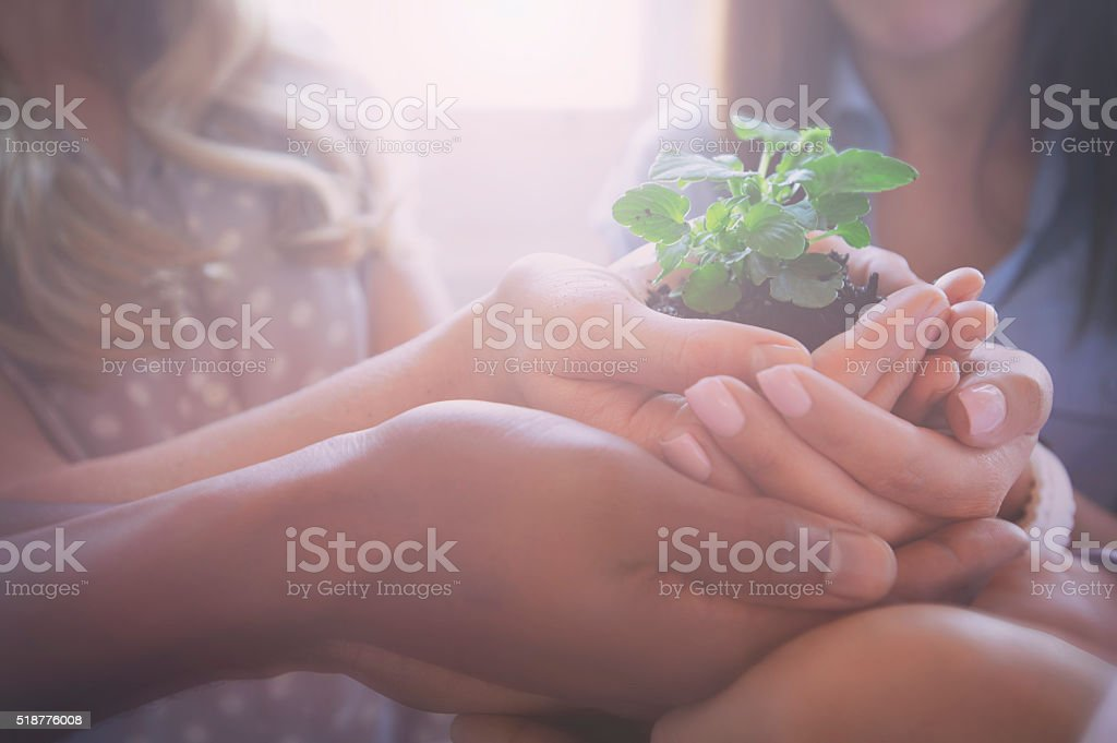 Growth concept. Group holding a seedling plant. stock photo