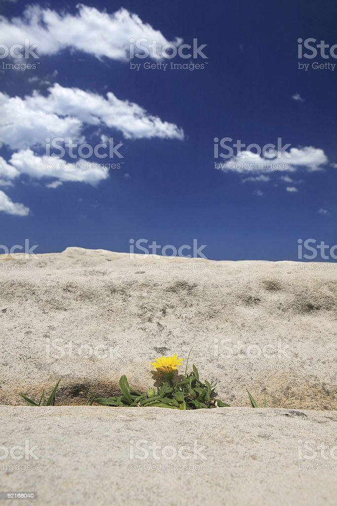Growth in extreme environment stock photo