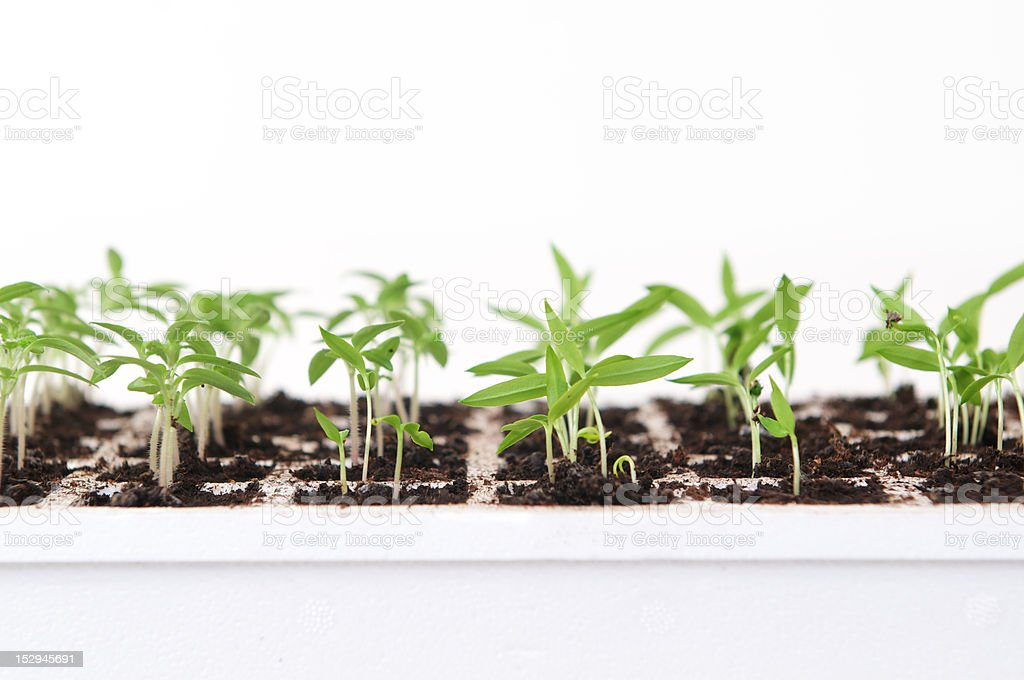 hydroponic plant system stock photo