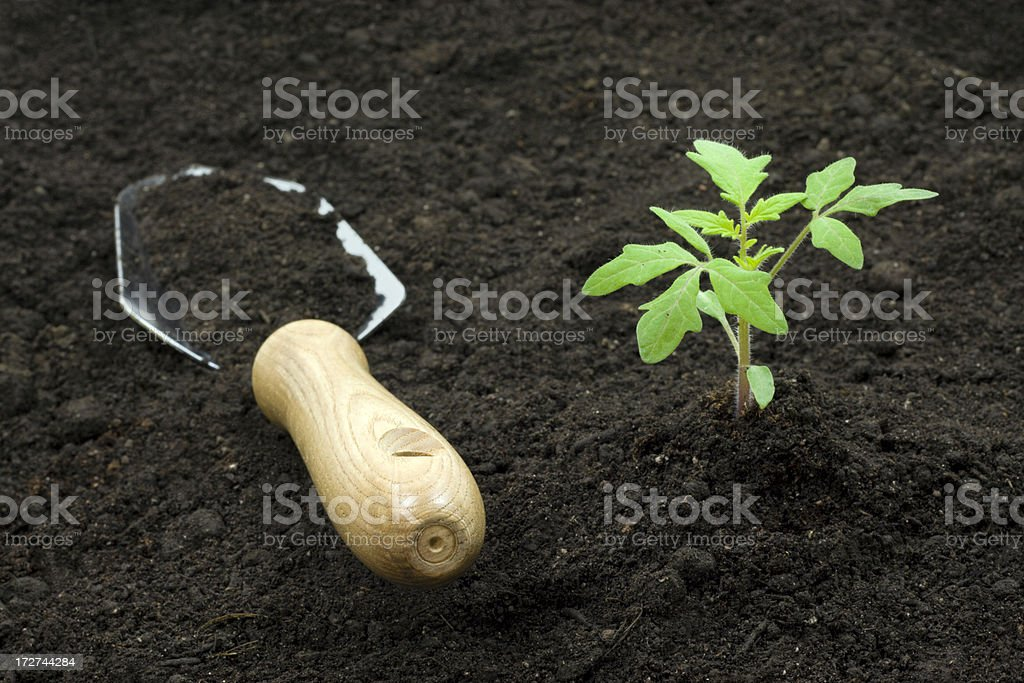 Growth royalty-free stock photo