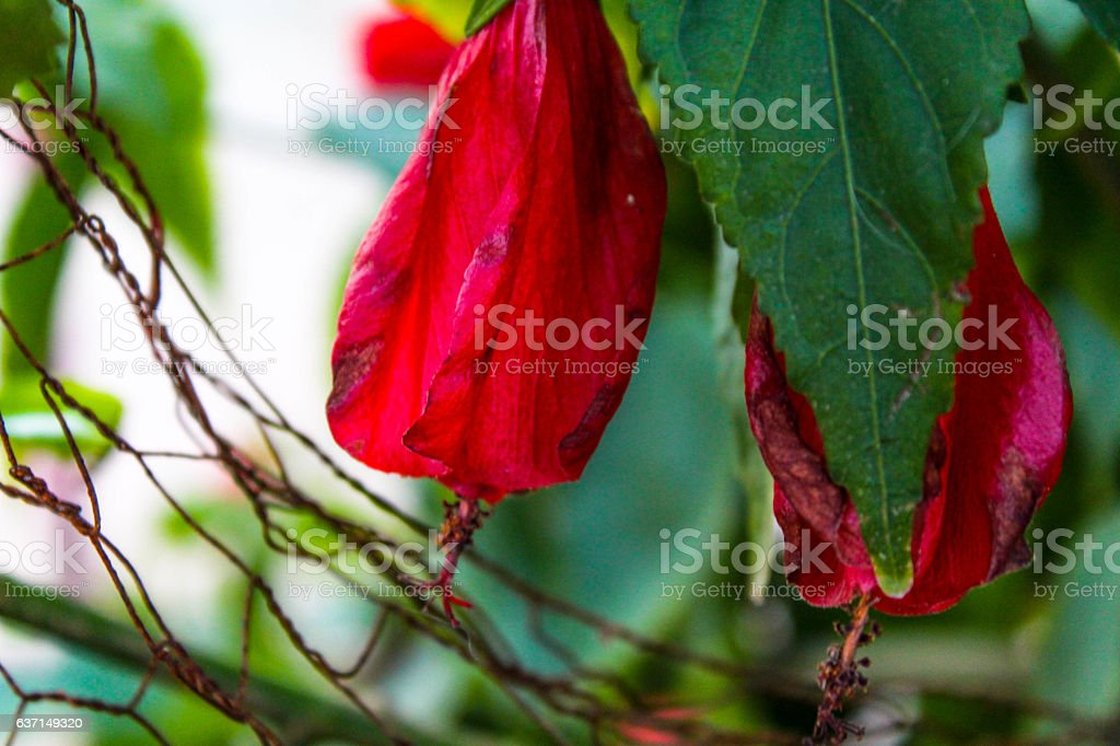 growth red flower stock photo