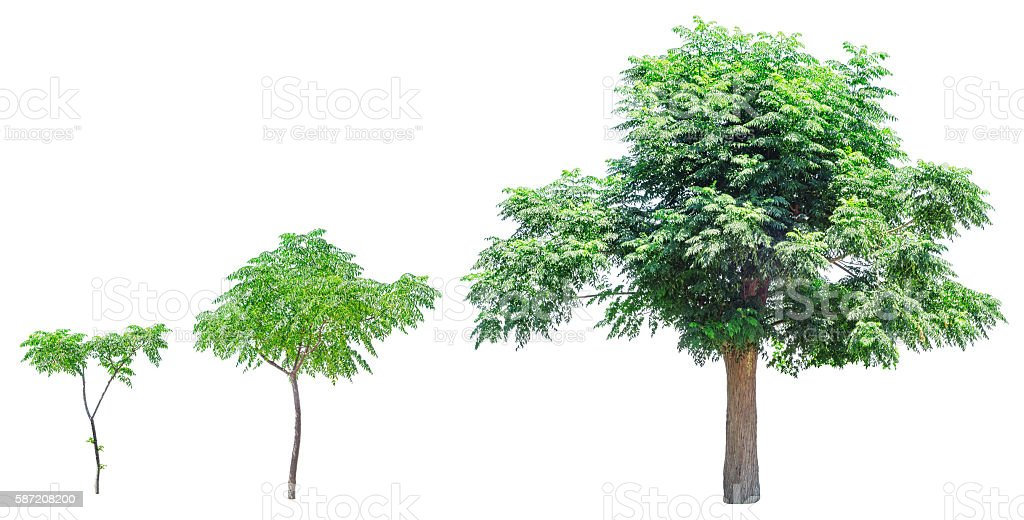 Growth stages of tree stock photo