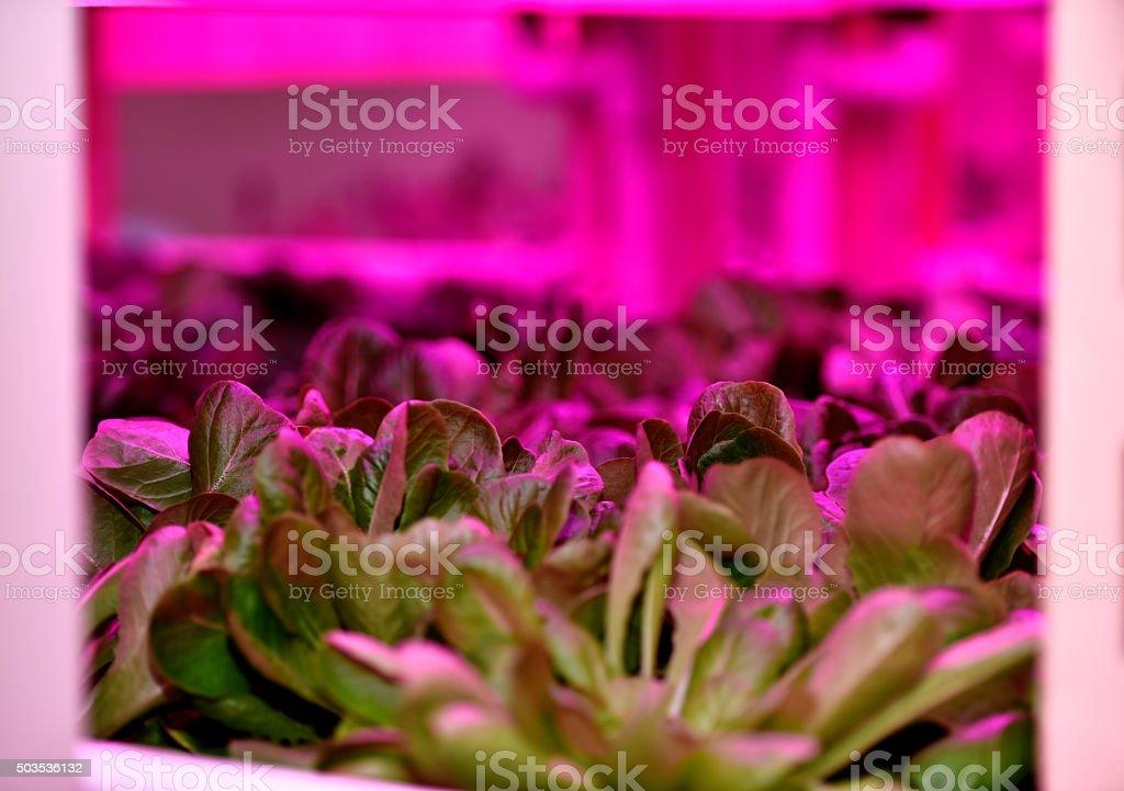Growth under the artificial light stock photo
