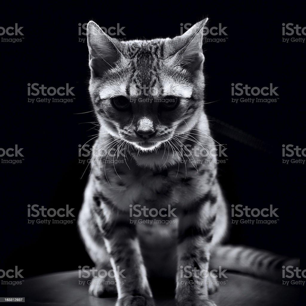 Grumpy Kitty stock photo