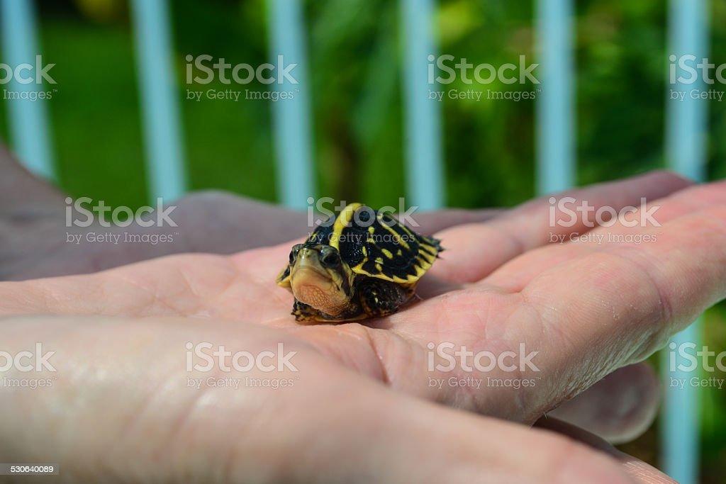 Grumpy Turtle stock photo