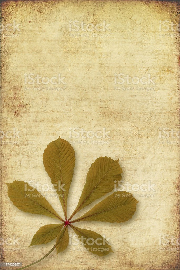 grunge background with autumn leave stock photo