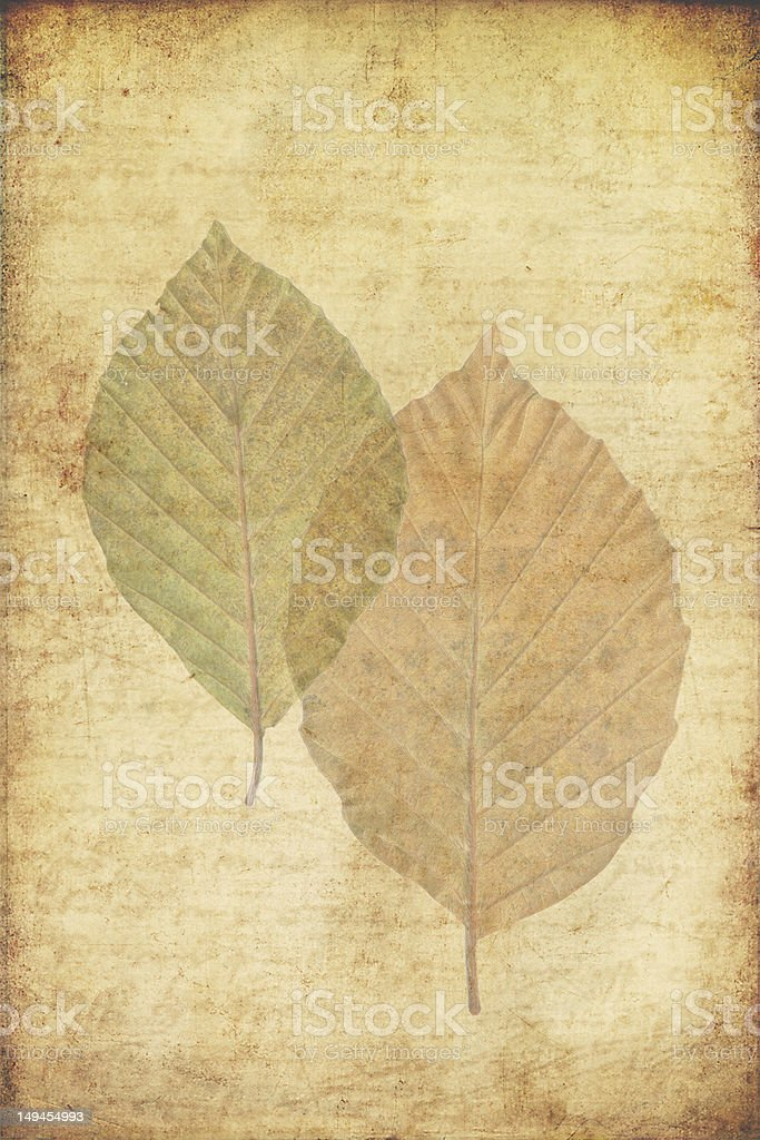 grunge background with autumn leaves royalty-free stock photo