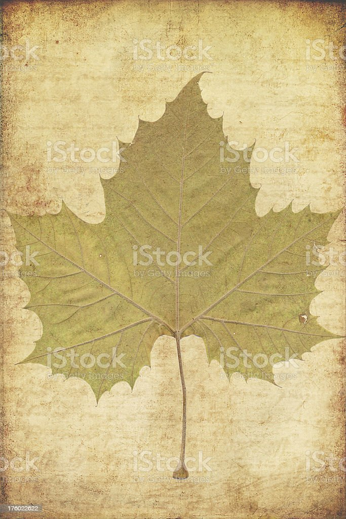 grunge background with autumn leaves stock photo
