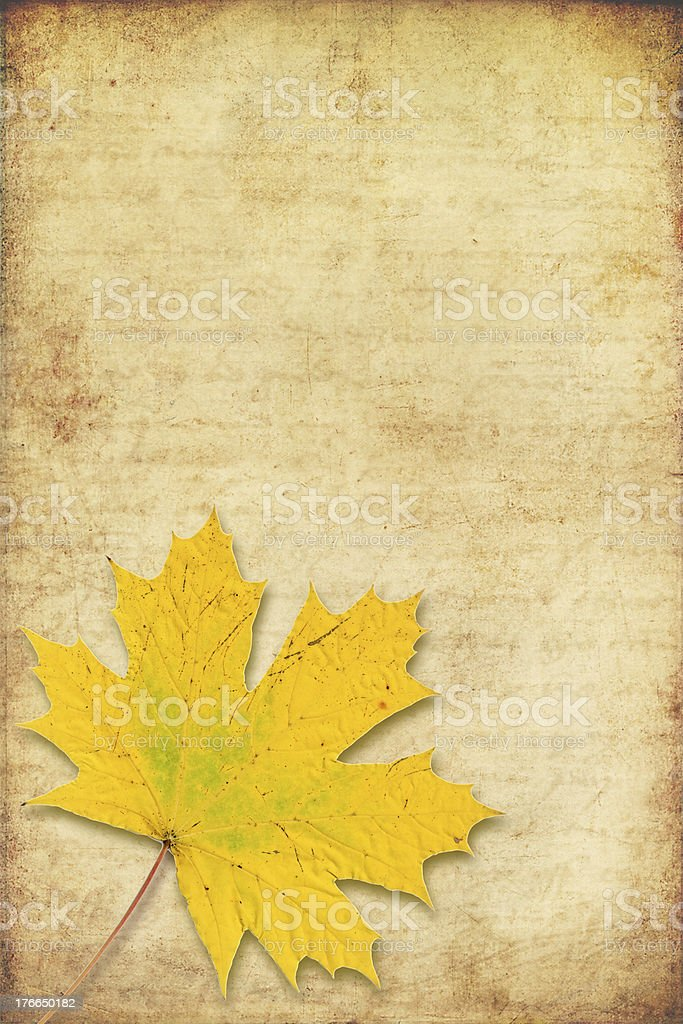grunge background with maple autumn leave stock photo