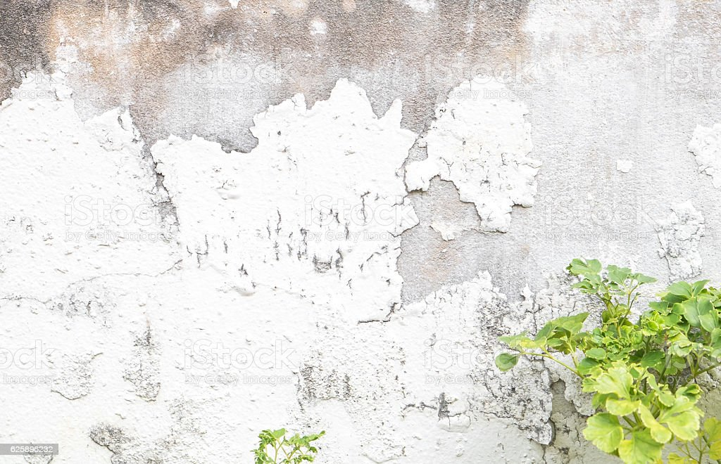 Grunge concrete wall and plant stock photo