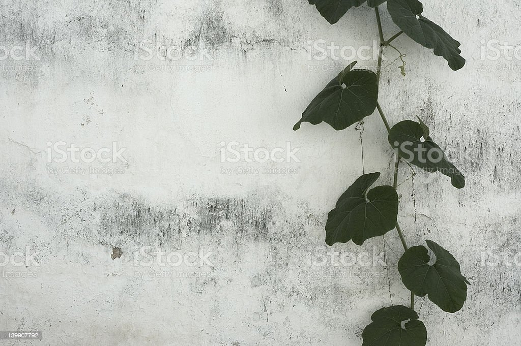 grunge floral background royalty-free stock photo