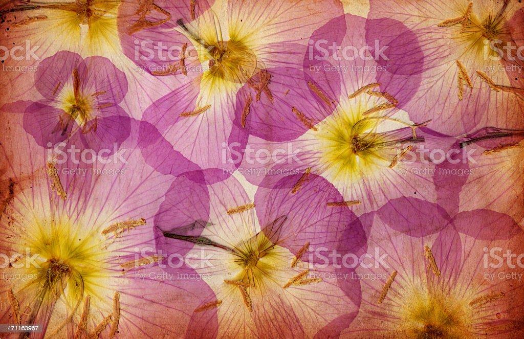 Grunge Floral Paper XXXL royalty-free stock photo