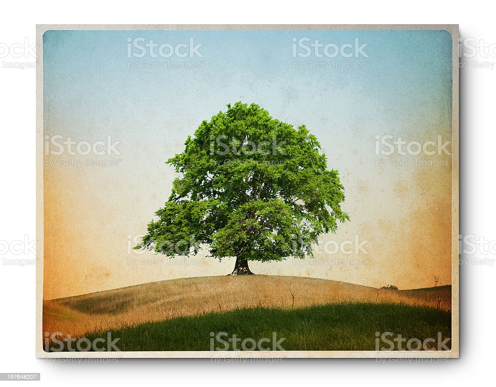 Grunge image of a lonely beech stock photo