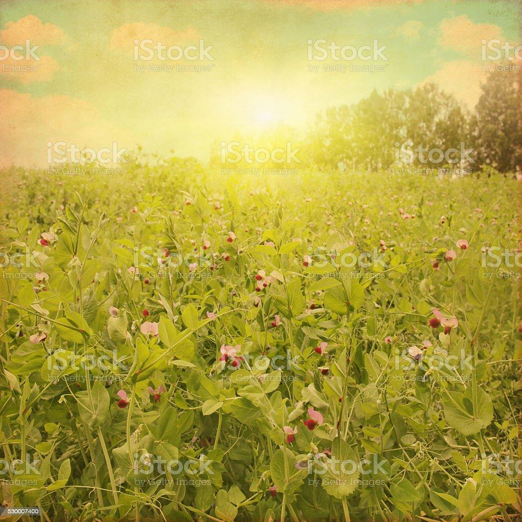 Grunge image of summer field. stock photo