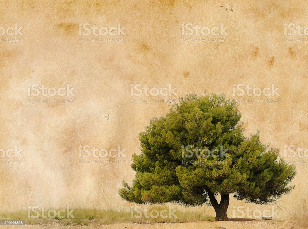 grunge image of tree on a vintage paper stock photo